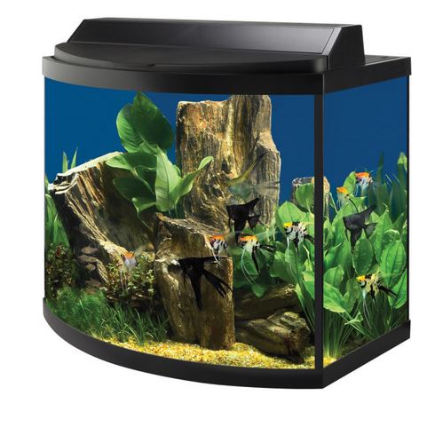 15 gallon tall tank pictures to pin on pinterest pinsdaddy for 15 gallon fish tank